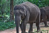 ELEPHANTS IN BANNERGHATTA NATIONAL PARK