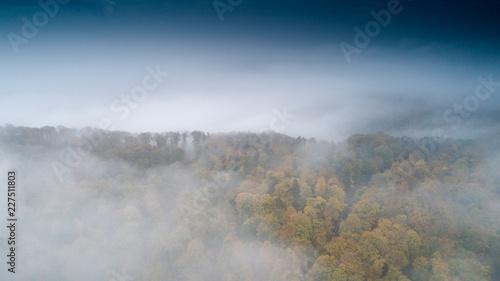 czarny las