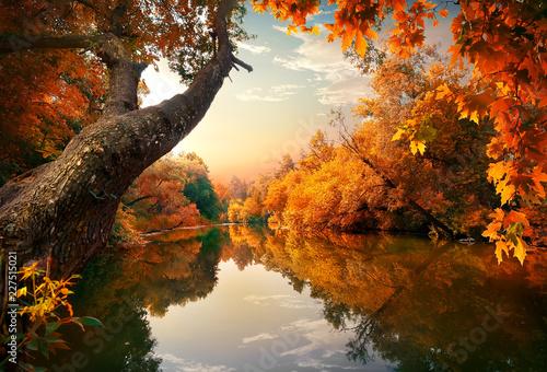 Fototapety, obrazy : Orange autumn on river