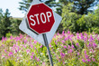 Slanted stop sign in a field of fireweed wildflowers on a sunny day