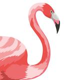 Flamingo Exotic and tropical bird