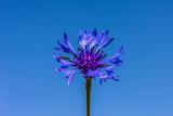 Kwiat #1