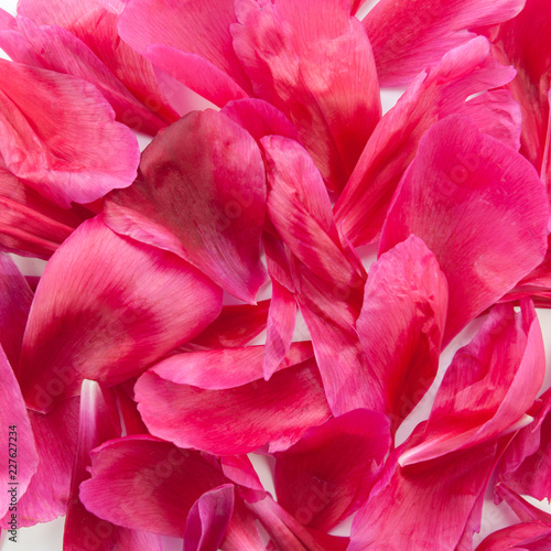 Background of beautiful pink peony petals. Top view - 227627234
