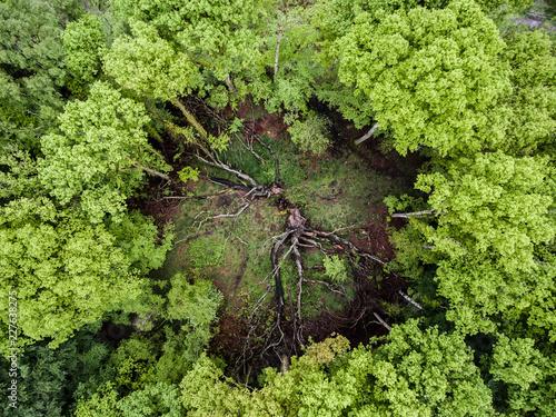 Foto Murales Tree circle