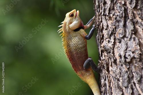 kameleon na drzewie