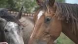 horse mane wind slow motion - 227656673