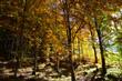 sunset on the autumn forest