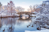 Central Park. New York. USA in winter covered with snow poster