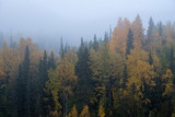 foggy morning in the forest