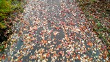 A park alley covered with leaves. - 227702670