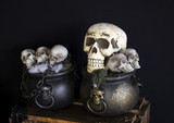 Human skull  head - 227702858