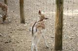 Deer in park - 227703005