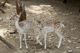 Deer in park - 227703009