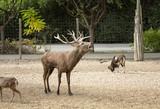 Deer in park - 227703021