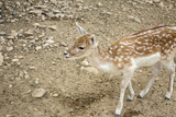Deer in park - 227703024