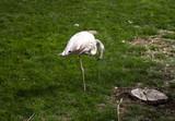 Flamingos in park - 227703058