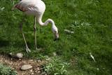 Flamingos in park - 227703071