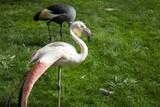 Flamingos in park - 227703076