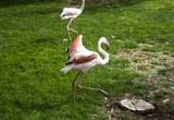 Flamingos in park - 227703082