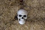 Human skull  head - 227703208