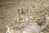 Deer in park - 227703241