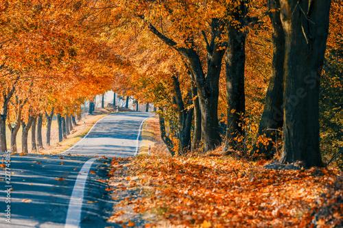 Leinwandbild Motiv beautiful trees on alley in autumn