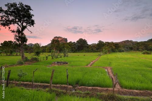 Foto Murales Reisfelder am Löwenfelsen von Sigiriya in Sri Lanka