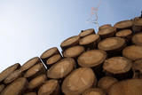 woodpile of tree trunks against a blue sky from an unusual perspective, copy space - 227770809