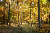 autumn forest with colorful foliage, seasonal nature background - 227771809