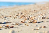 Grußkarte - Strandurlaub - Strand mit Muscheln