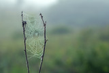 Cobweb in the grass - 227782204