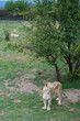The lioness standing at the tree on the grass