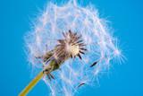 Nahaufnahme einer dekorativen Blüte