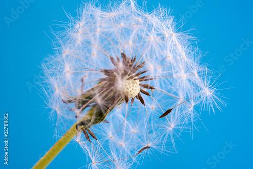 Nahaufnahme einer dekorativen Blüte - 227811602