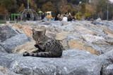 street animals in city life