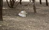 Deer in park - 227826222