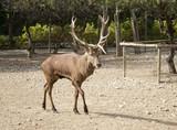 Deer in park - 227826254