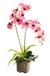 Floral arrangement from artificial orchid flowers in old ceramic flower pot.
