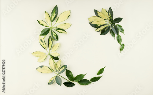 Foto Murales Tropical palm and ficus leaves on light green, lime background.