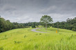 Green grass field at Khao Yai National Park,Thailand. - 227883204
