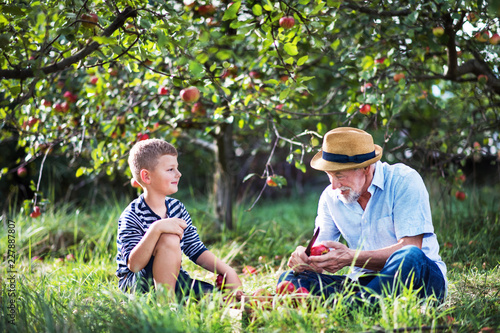 Leinwandbild Motiv A senior grandfather with grandson sitting on grass in orchard, cutting apple.