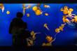 Aquarium tank tourist man looking at jellyfish at zoo, fun activity for people.