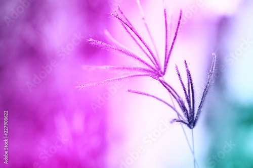Leinwanddruck Bild Soft focus Grass Flower  abstarct spring ,summer ,autumn nature colorful  wallpaper background