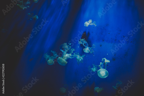 Jellyfish floating and swimming in the underwater