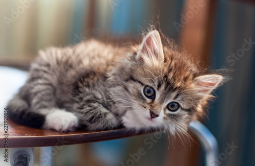 beautiful little kitty - 227928056