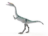 3d rendered illustration of a Coelophysis