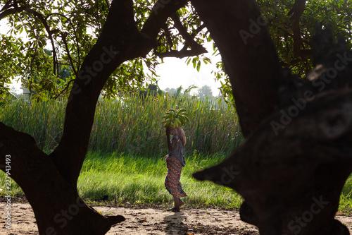 Africa, Benin: donna che porta casco di banane
