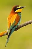 Portrait of a colorful bird - 227946073
