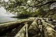 Taylor Point, Saturna Island