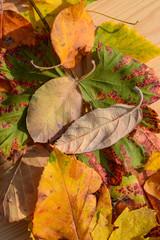 Herbst Laub farbig Natur Hintergrund Blatt Muster und Struktur